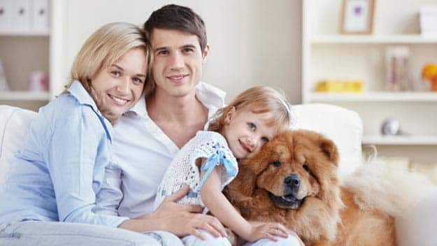 Wills & Trusts dog-young-family Direct Wills Wibsey